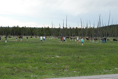 people and bison (kiltedlibrarian) Tags: bison stupidpeople yellowstonepark