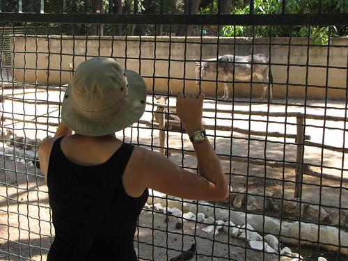 Mini-zoo in Athens
