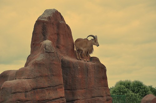 Zoo 095