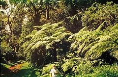 Tree fern (Cyathea atrovirens) helecho arbreo ........... Original= (3431 x 2241) (turdusprosopis) Tags: fern ferns samambaia helechos pteridophyta mataatlntica cyatheaceae selvamisionera xaxim selvaparanaense selvaatlntica floraargentina fetoarbreo fetosarbreos plantasargentinas plantasdeargentina plantasautctonasargentinas plantasautctonasdelaargentina floraautctonaargentina floraautctonadeargentina plantasnativasargentinas plantasnativasdeargentina plantasnativasdelaargentina floradeluruguay plantasdeluruguay floradelaargentina floradeargentina plantasautctonasdeargentina floraautctonadelaargentina floradelparaguay plantasdelparaguay floranativabrasileira floranativadobrasil floradobrasil argentineindigenousplants helechoarborescente helechosarborescentes helechosargentinos ornamentalferns pteridophytas helechosnativos helechosdeluruguay uruguayanferns fernsofuruguay uruguayasferns argentineferns fernsofargentina argentinasferns helechosornamentales trichipterisatrovirens alsophilaatrovirens chachbravo cyatheaatrovirens crucecaballero riverauruguay chachmacho parqueprovincialcrucecaballero distritodelospinares sectorplanaltense alsophilatrichophlebia polypodiumatrovirens alsophilaradens alsophilaverruculosa alsophilamiquelii alsophilakleinii alsophilaleptocladia alsophilaproceroides