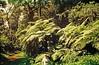 Tree fern (Cyathea atrovirens) helecho arbóreo ........... Original= (3431 x 2241) (turdusprosopis) Tags: fern ferns samambaia helechos pteridophyta mataatlântica cyatheaceae selvamisionera xaxim selvaparanaense selvaatlántica floraargentina fetoarbóreo fetosarbóreos plantasargentinas plantasdeargentina plantasautóctonasargentinas plantasautóctonasdelaargentina floraautóctonaargentina floraautóctonadeargentina plantasnativasargentinas plantasnativasdeargentina plantasnativasdelaargentina floradeluruguay plantasdeluruguay floradelaargentina floradeargentina plantasautóctonasdeargentina floraautóctonadelaargentina floradelparaguay plantasdelparaguay floranativabrasileira floranativadobrasil floradobrasil argentineindigenousplants helechoarborescente helechosarborescentes helechosargentinos ornamentalferns pteridophytas helechosnativos helechosdeluruguay uruguayanferns fernsofuruguay uruguayasferns argentineferns fernsofargentina argentinasferns helechosornamentales trichipterisatrovirens alsophilaatrovirens chachíbravo cyatheaatrovirens crucecaballero riverauruguay chachímacho parqueprovincialcrucecaballero distritodelospinares sectorplanaltense alsophilatrichophlebia polypodiumatrovirens alsophilaradens alsophilaverruculosa alsophilamiquelii alsophilakleinii alsophilaleptocladia alsophilaproceroides