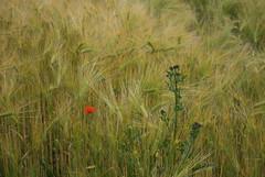 (Graham Kirby) Tags: landscape kingsbarns smcpentaxda1855mmf3556alii