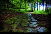From the Wilderness (TheJbot) Tags: light green wet rain japan stone forest blog path hdr answers jbot walktowardsthelight thejbot