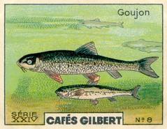 gilbert rivière 8