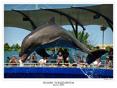 Delfin (Romn Emin) Tags: unitedstates florida miami eu dolphins animales miamiseaquarium delfines eeuu seaquarium topdeckdolphinshow