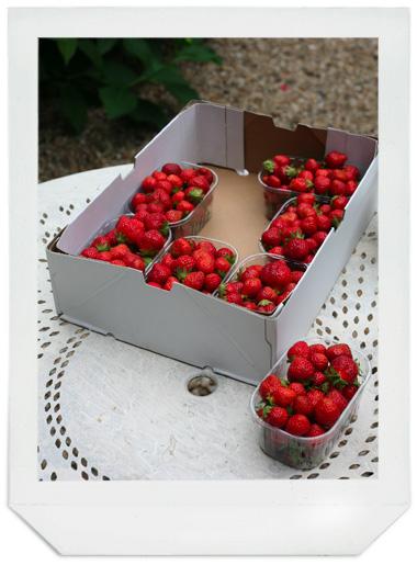 fraises_08