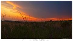 quando il sole va via (Andrea Rapisarda) Tags: sunset red naturaleza nature clouds geotagged countryside tramonto nuvole natura olympus campagna sicily sicilia paesaggio fourthird quattroterzi rapis60 andrearapisarda olympuse620 geo:lat=37550702 geo:lon=14949903