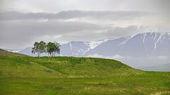 It takes two (Siggidri) Tags: trees sky mountain mountains tree grass clouds iceland gras 2009 fjll fjall hjaltadalur capturenx nikond300 capturenx2