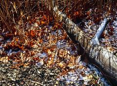 Peloponnese (Giovanni C.) Tags: winter light white snow color 120 mamiya film nature analog mediumformat geotagged photography photo 645 europe fuji natural photos scanner scenic hellas slide 120film greece grecia scanned fujifilm mf analogue 6x45 griechenland fujichrome provia mamiya645 provia100f 220 rollfilm peloponnese fujiprovia100f provia100 ilovefilm gcap v700 ελλάδα bestofnature filmisnotdead lovefilm helmos aigio diakofto nohdr achaia mamiya645pro ελλάσ πελοπόννησοσ αίγιο aigion διακοφτό χελμόσ 645proprotl giovannic άχαϊα