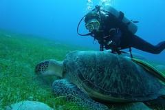 Potápění v Rudém moři