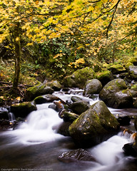 Fall Stream flowing (dedge555) Tags: green rock creek waterfall moss nikon nikkor 2470mm autumnstream d700 nikond700 2470mmf28g afsnikkor2470mmf28ged varinduo