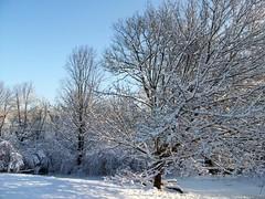 Snow_12609b