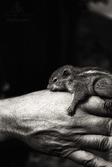 A Helping Hand (funk_so_bravo) Tags: life wild india white black cute nature animal forest nose eyes squirrel hand legs little background fingers ears human helping wrinkels
