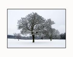 Cool Frozen Trees  - Scottish Winter Scene (Magdalen Green Photography) Tags: trees winter snow tayside scottishlandscape christmasscene dsc1563 iaingordon scottishwinterscene coolfrozentrees