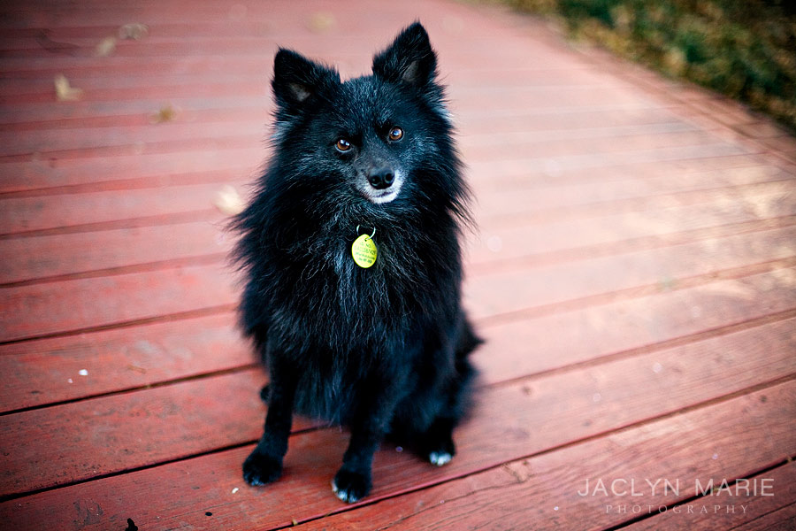Wichita, Kansas pet portrait photography
