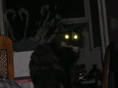 behavior cat