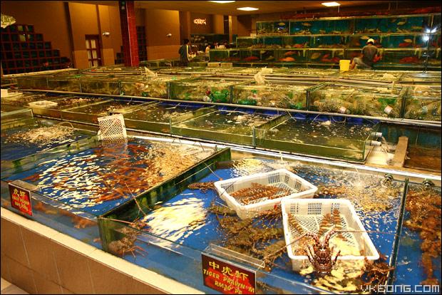 live-seafood-tanks'