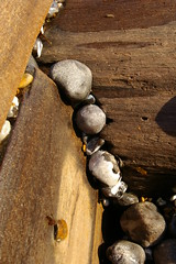 pebbles stuck (debs-eye) Tags: sea beach chalk pebbles eastbourne groyne groynes