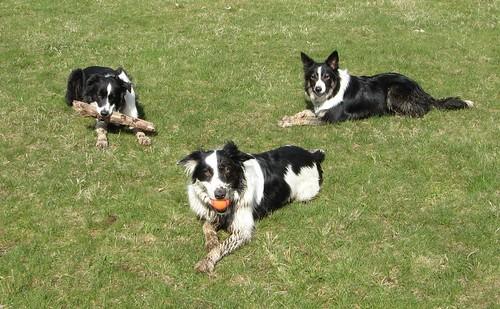 Tess,Chase&Shai