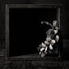 Still Life - Seduction (kevsyd) Tags: stilllife seedpod manray kevinbest pentax645d