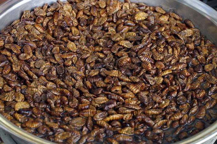 Silkworm larvae(2)