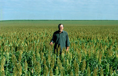 Manoel Sorgonildo (Shigow) Tags: victor shigueru mine shigow ituverava sp brazil brasil nikon fm3a filme film dnp centúria asa100sorgo plantação crop lavoura fazenda farm
