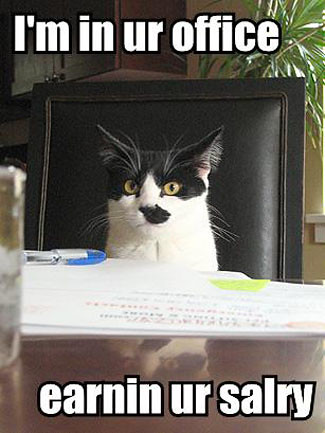 3693814707 45af99a0e9 LOL Cats in your office: I Can Haz Work?