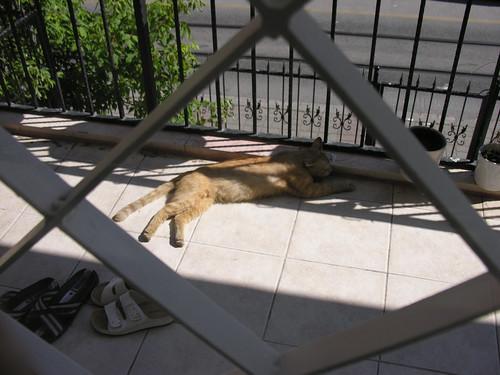 Ő egy sima erkélylakó. Minden reggel ott fekszik. Legnagyobb veszélyt az jelenti, hogy átesünk rajta.