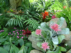 Tropical plants in Edmonton? (2methylethel) Tags: flowers plants canada edmonton pyramid conservatory alberta tropical muttart