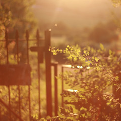 (mister sullivan) Tags: uk sunset sun wales 50mm countryside gate dusk down newport flare fields f18 buttonmooon