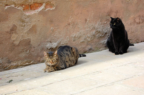 venetian cats (& a lizard) da te.