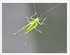 Jiminy Grille zu Besuch! - Jiminy Cricket on a visit!