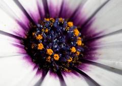 Flower Macro-1