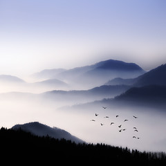 Flying Over The Fog (Philippe Sainte-Laudy) Tags: mountains nature birds fog landscape bravo outstandingshots fivestarsgallery specialtouch bratanesque platinumheartaward philippesaintelaudy theperfectphotographer nikond300 world100f alemdagqualityonlyclub thearcadiasociety storybehindimage bestofmywinners mountainsociety