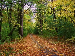My Walk In the Woods (Renee Rendler-Kaplan) Tags: autumn trees fall leaves forest woods evanston pathway chicagoist evanstonillinois nikond80 photocontesttnc09 reneerendlerkaplan