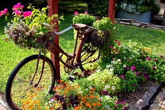 Blooming Bycicle (Bunches and Bits {Karina}) Tags: flowers texas gruene bycicle