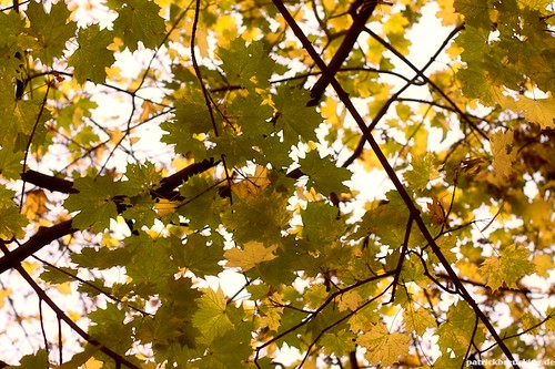Colored Leaves II