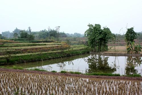 paths through fields2