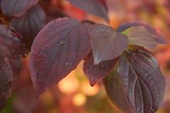 leaves 21