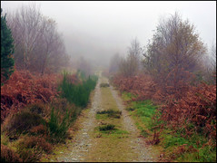 Season Of Mists... (Fifi 1968) Tags: tree dedication forest father rowan lochlomond cashel rowardennan commemorate robertbenson