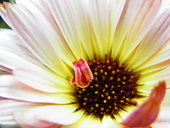 Chicago Botanic Garden (4) (martiger) Tags: chicago flower macro garden flora natura botanic makro kwiat flowersarebeautiful