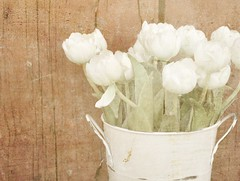 Country Tulips (luvpublishing) Tags: flowers white texture vintage tin tulips overlay container oldwood picnik redbarn silkflowers layered fauxvintage explored thegalleryoffinephotography softdreamyandethereal