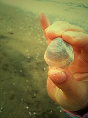 貝をみつけたよ!