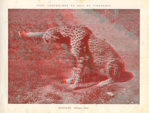 zoorelief p12