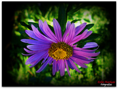 La flor (Rober Martinez Photography) Tags: espaa naturaleza flower nature garden spain plantas flor jardin galicia