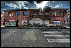 Roa - Nice Beaver too (Romany WG) Tags: street urban art abandoned animal graffiti village belgium outsider beaver aerosol explorers exploration urbex roa doel ces53