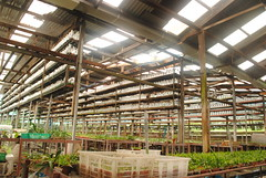 Orchid Nursery (View 3)