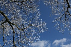 """""""Winter came down to our home one night Quietly pirouetting in on silvery-toed slippers of snow, And we, we were children once again."""" (summerbloomz etc) Tags: trees winter friends snow beauty clouds december bluesky 2009 winterwonderland snowcoveredbranches citrit"""