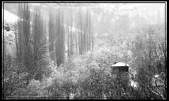 باغهاي روستاي کنگ - زمستان 88 (Esmaeel Bagherian) Tags: winter bw nature iran ایران درخت باغ خانه برف طبیعت زمستان روستا باقریان