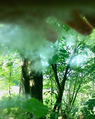 Pluis 06 (Fransje.RIP) Tags: groen pluis
